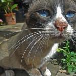 Mascota cat