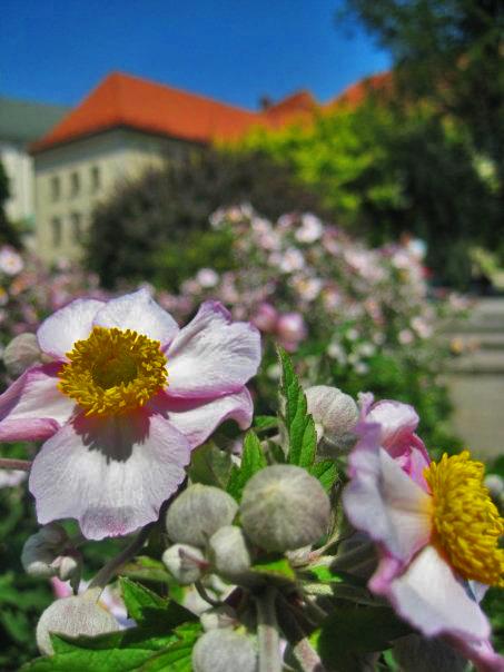 Flowers, Wawel Castle, Krakow.